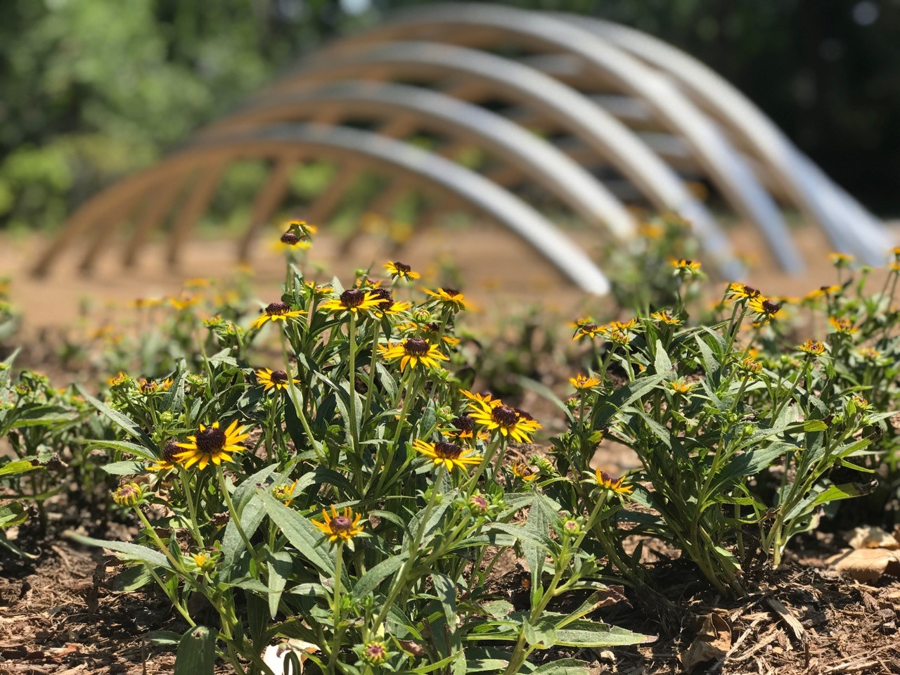 New butterfly garden, pavilion, sculpture and walking paths ready to enjoy in Minturn Park!